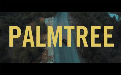 PalmTreeMV_Image.jpg